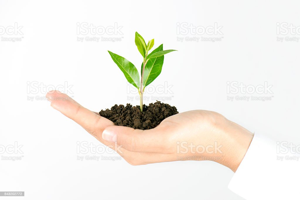 Plant In Human Hand stock photo