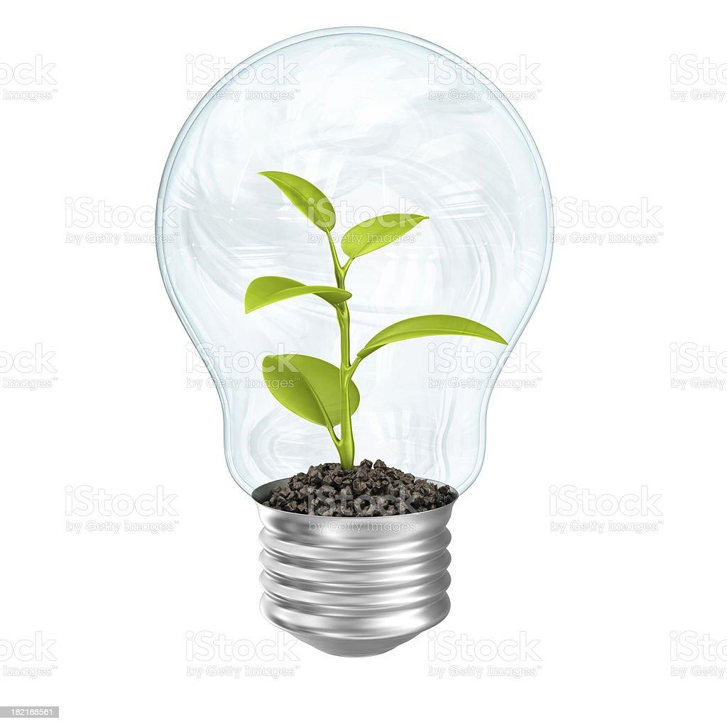plant in lightbulb royalty-free stock photo