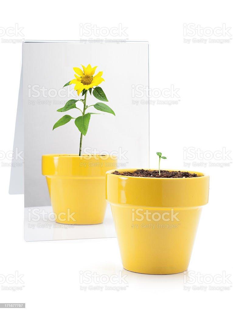 Plant in Mirror stock photo