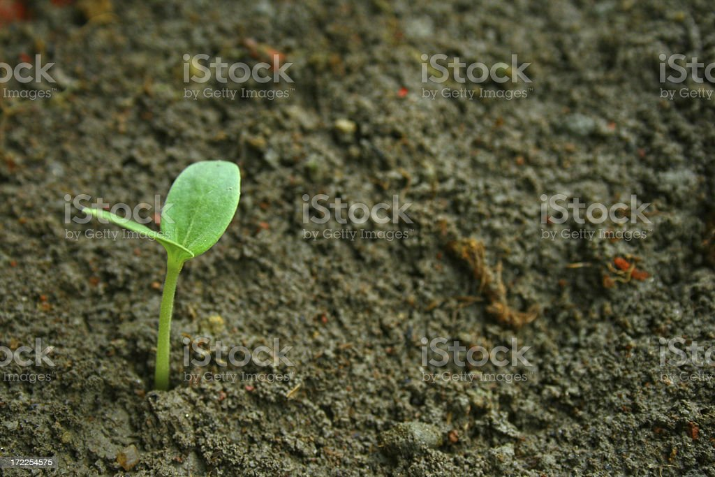 Plant in nature royalty-free stock photo