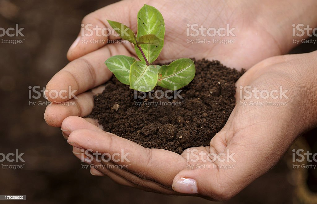Plant in palm of hand royalty-free stock photo