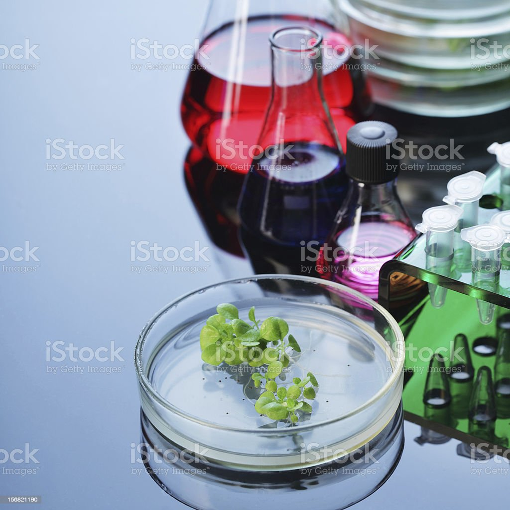 plant in petri dishes stock photo