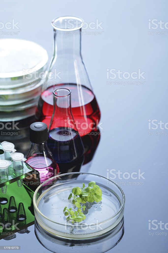 plant in petri dishes royalty-free stock photo