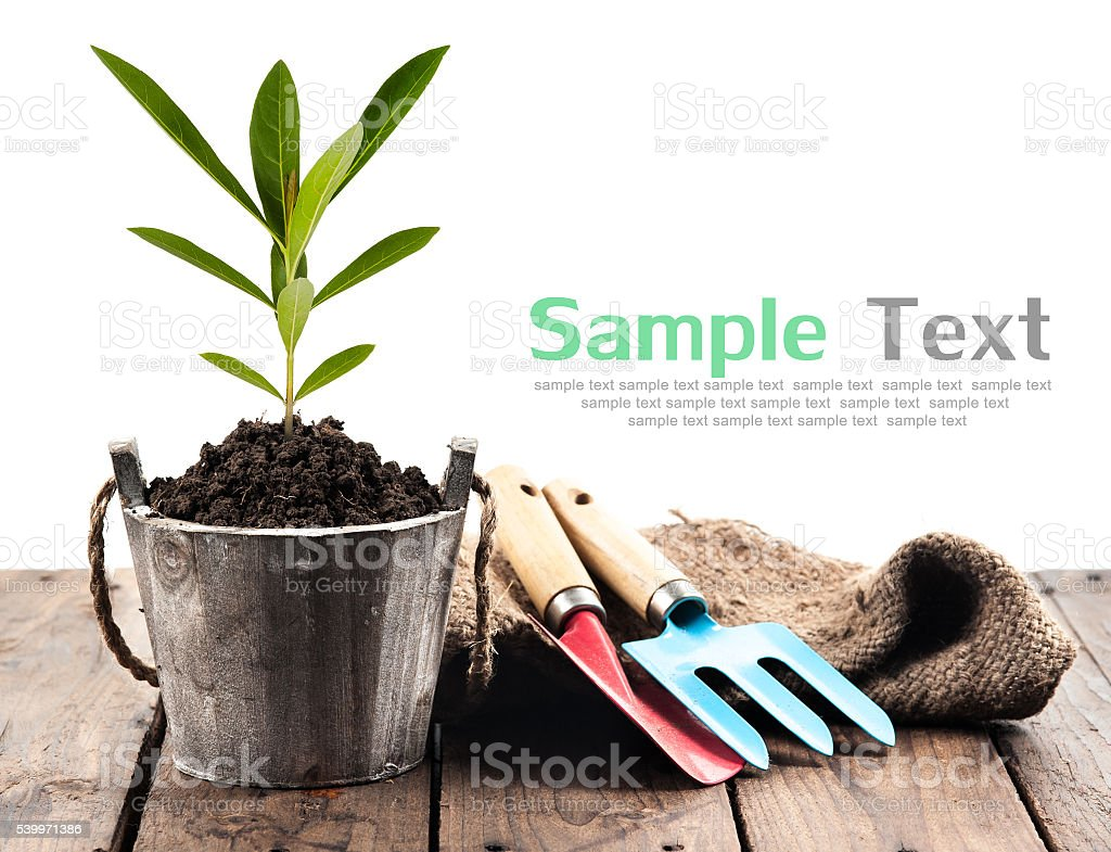 Plant in pot and garden tools on perspective wood stock photo