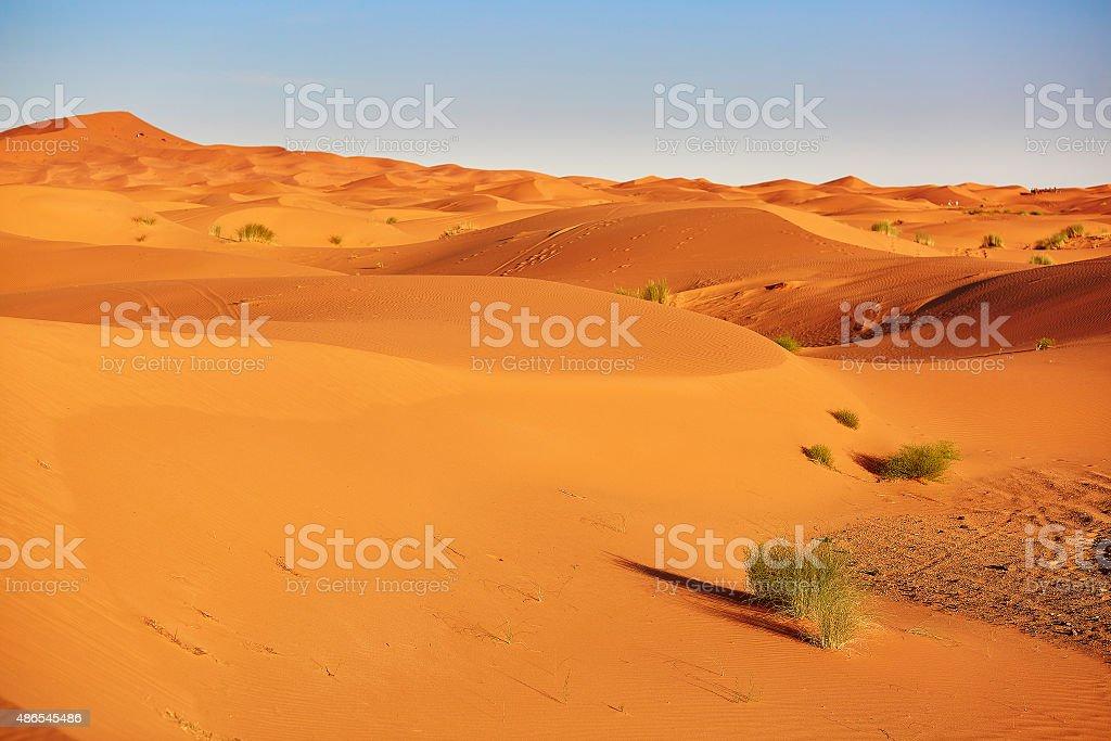 Plant in Sahara desert stock photo