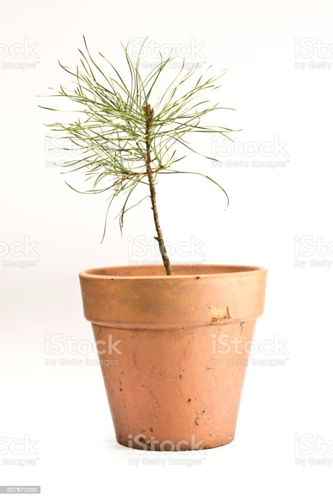 Plant in Terracotta Chipped Pot stock photo