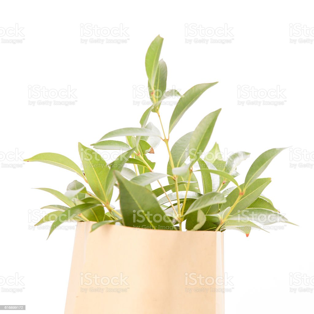 Plant in the paper bag stock photo