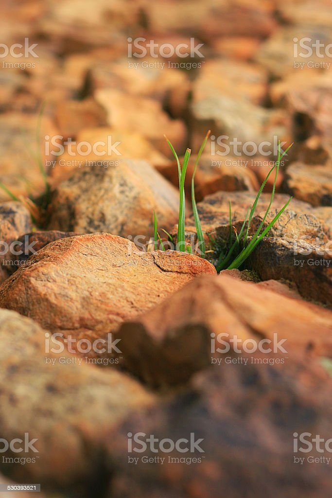 plant in the rocks stock photo
