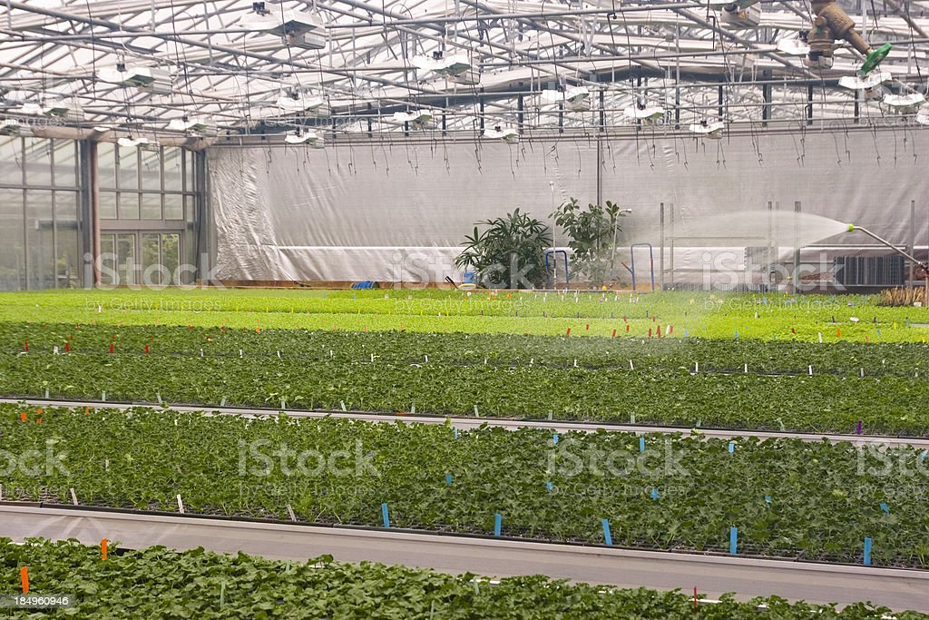 Plant Irrigation in Greenhouse royalty-free stock photo