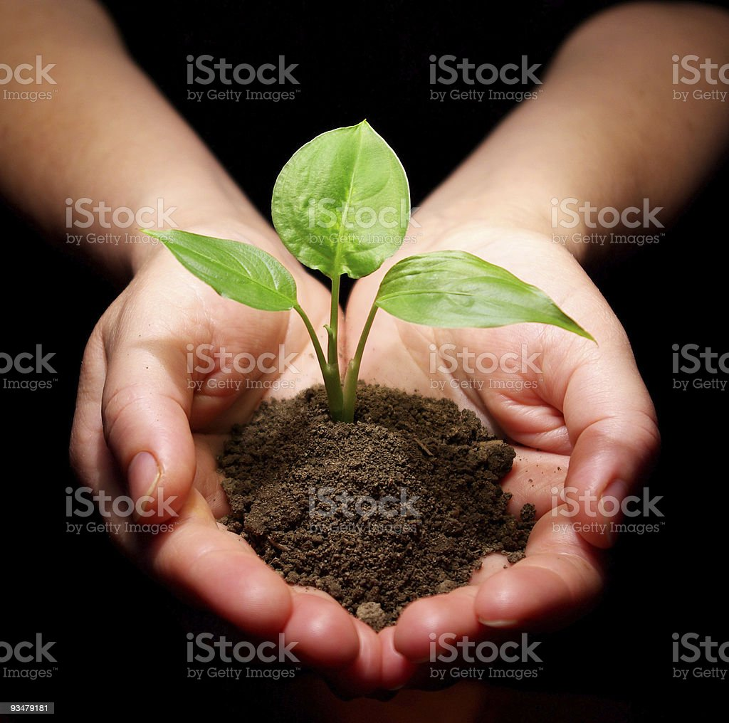 plant is in hands royalty-free stock photo