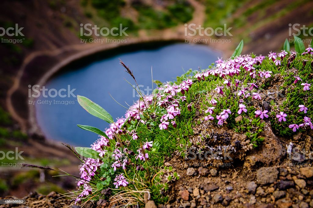Plant, Keri? (Kerith) volcanic crater lake, Golden Circle, Gr?msnes, Iceland stock photo