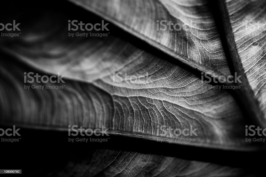 Plant leaf detail royalty-free stock photo