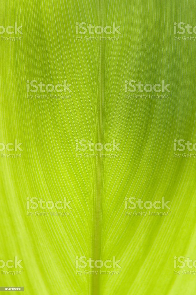 Plant Leaf royalty-free stock photo