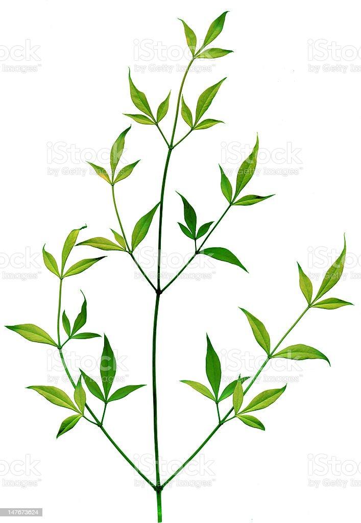 Pflanze Blätter Lizenzfreies stock-foto
