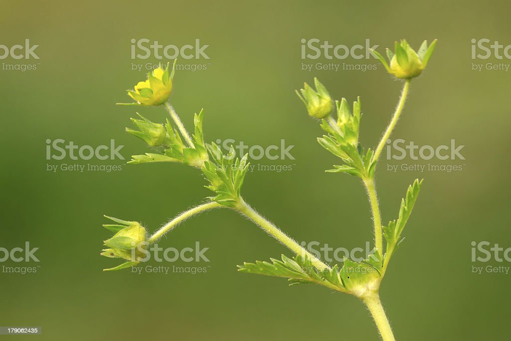 plant leaves royalty-free stock photo