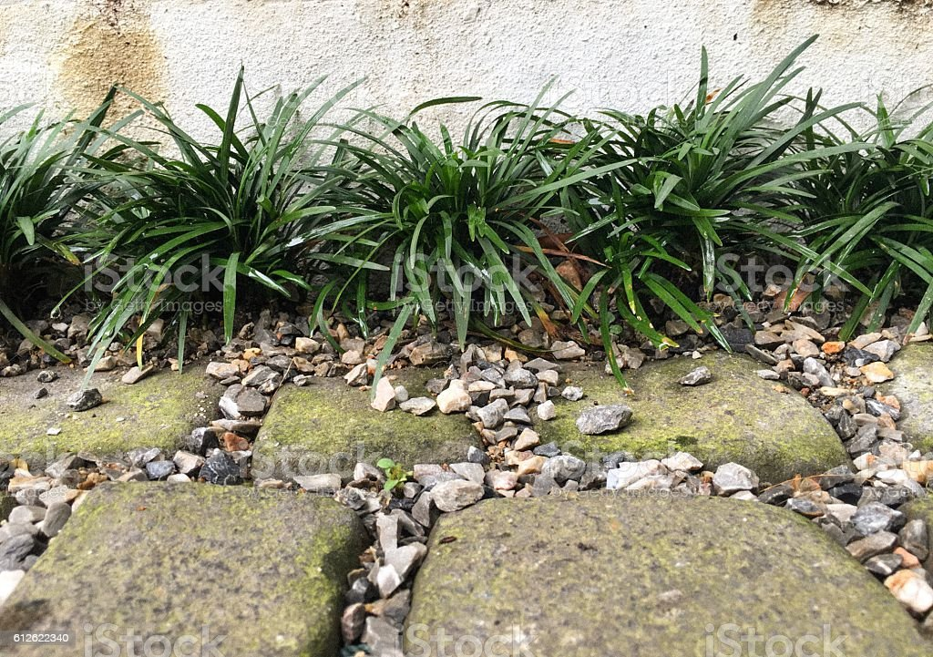 Plant line along block concrete in the garden royalty-free stock photo