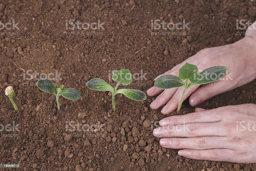 plant new life stock photo