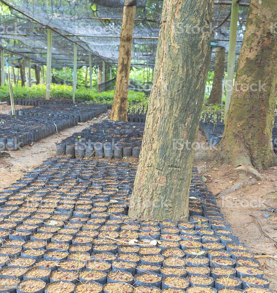 plant nurseries royalty-free stock photo