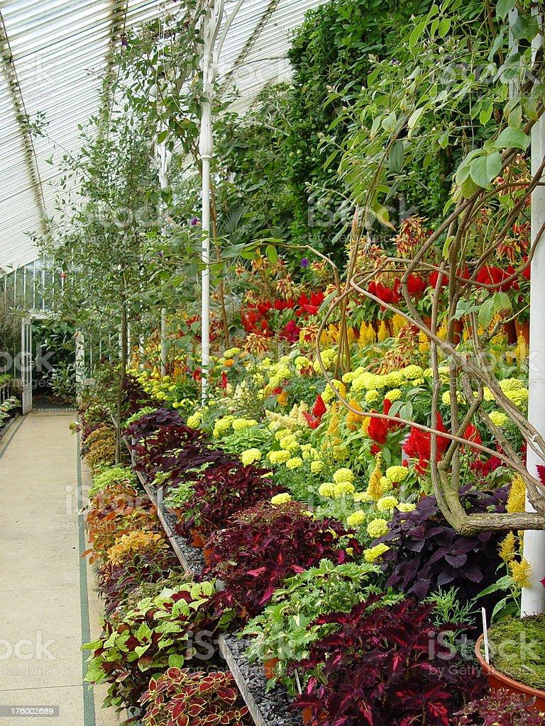 Plant Nursery royalty-free stock photo