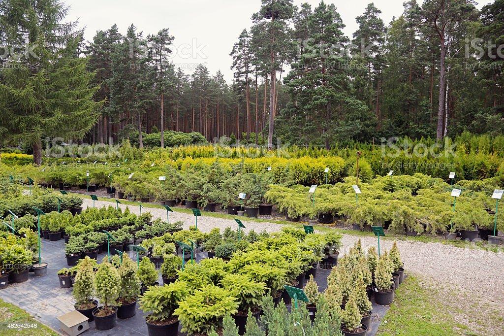 plant nursery stock photo
