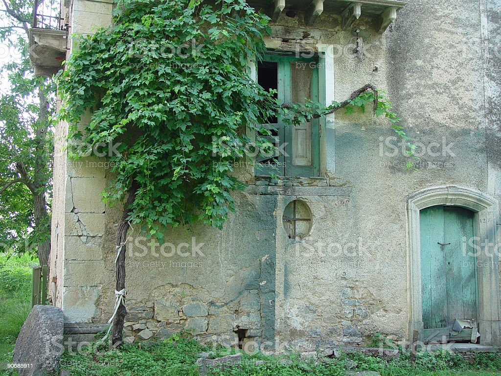 Plant of grapes near an old home royalty-free stock photo
