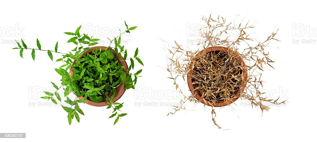 Plant of spring and winter in flowerpot stock photo