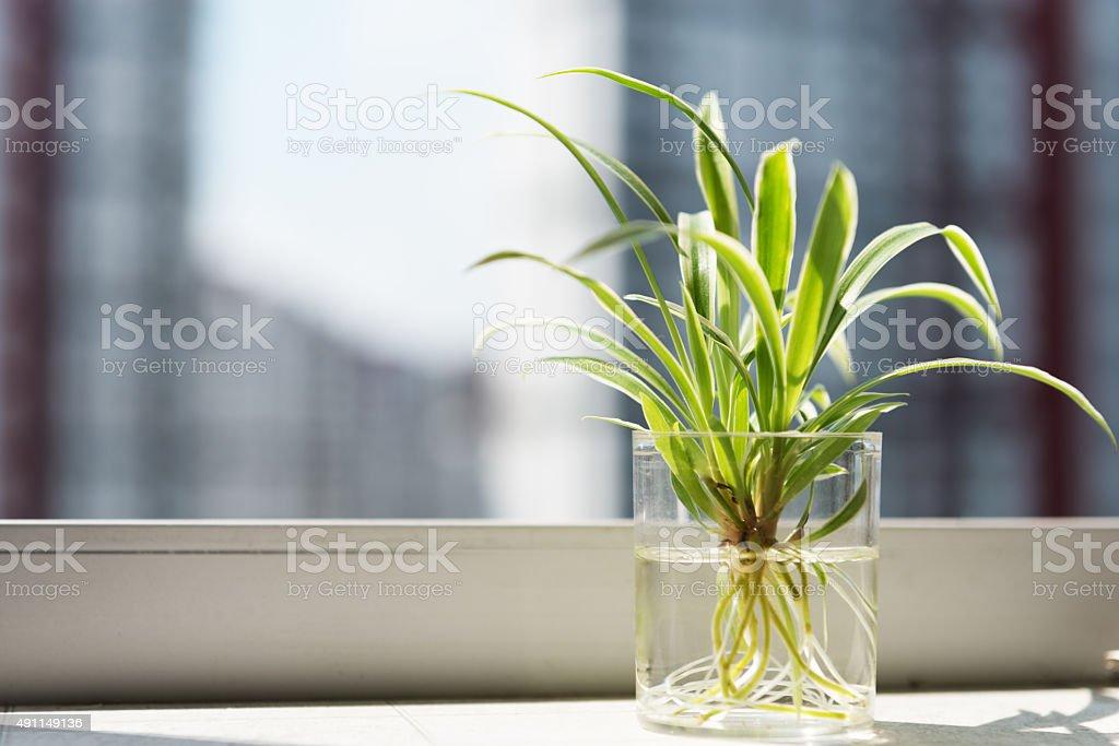 Plant on a windowsill stock photo