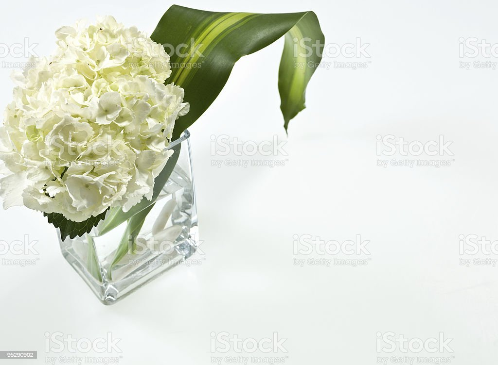 Plant on corner royalty-free stock photo