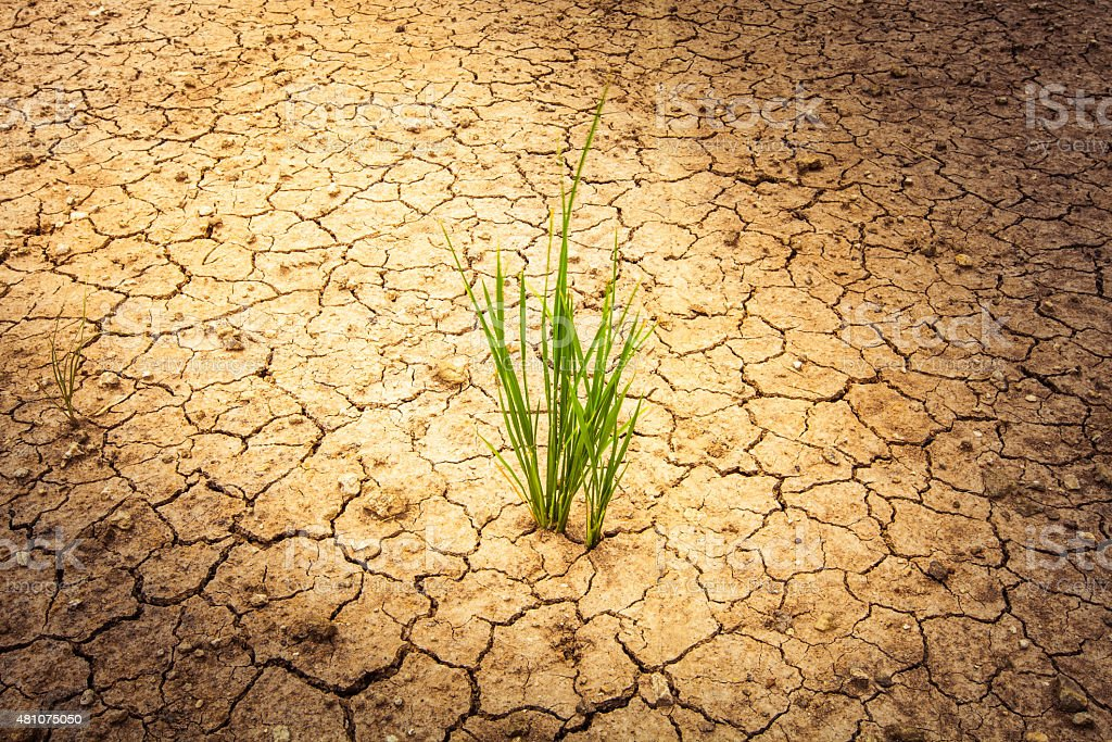 plant on cracked soil and dry in dry season stock photo