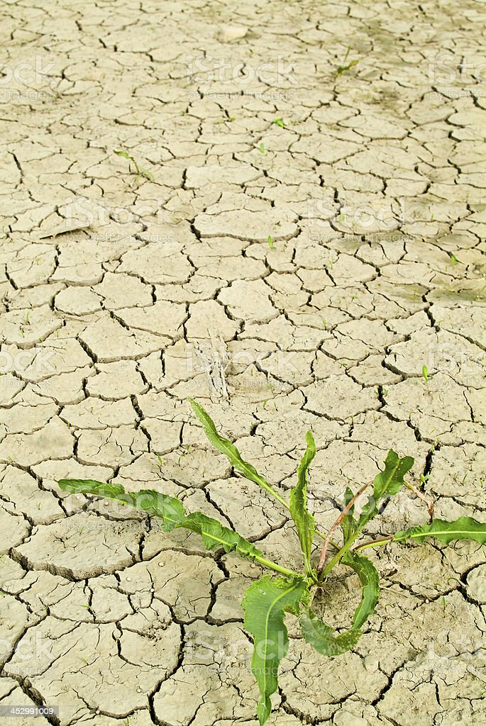 Plant on dry earth royalty-free stock photo