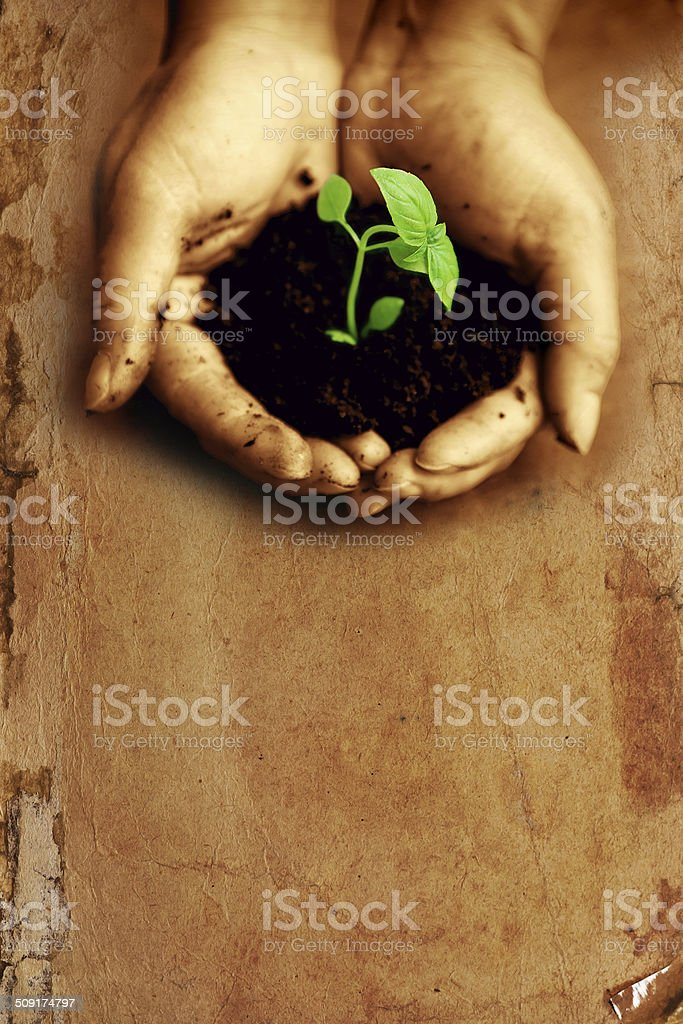 Plant on hands stock photo