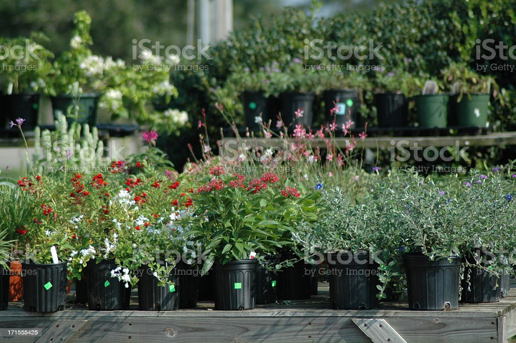 Plant on pots for sale at greenhouse royalty-free stock photo