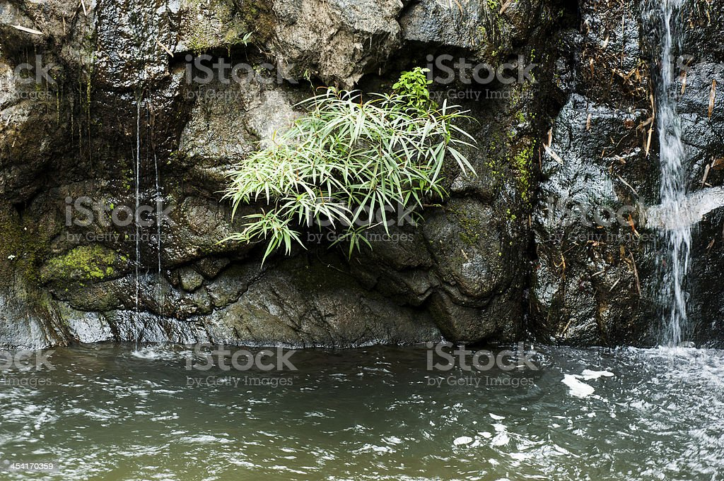 Plant on small mountain stream royalty-free stock photo