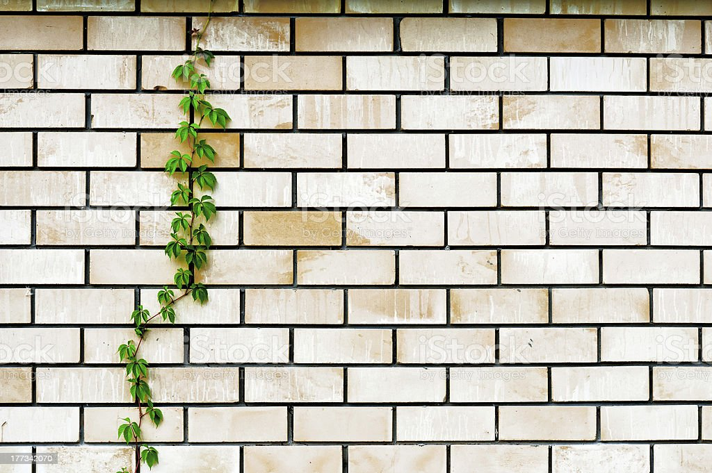 plant on the wall royalty-free stock photo