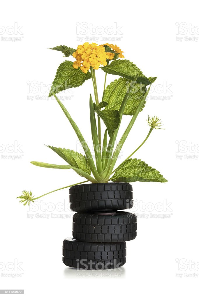 Plant on tires royalty-free stock photo