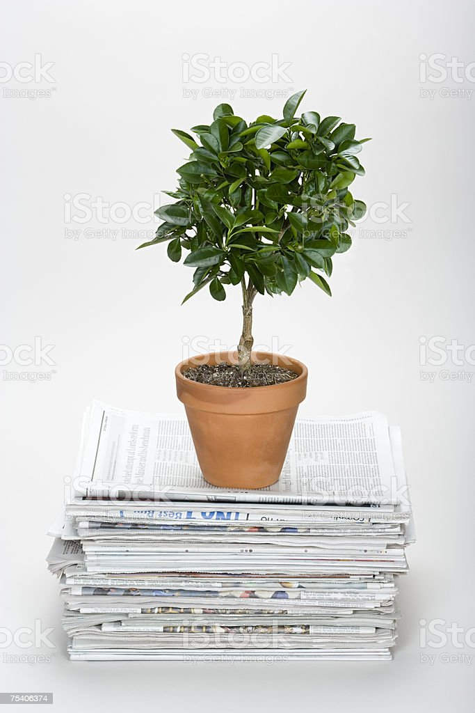Plant on top of pile of newspapers stock photo