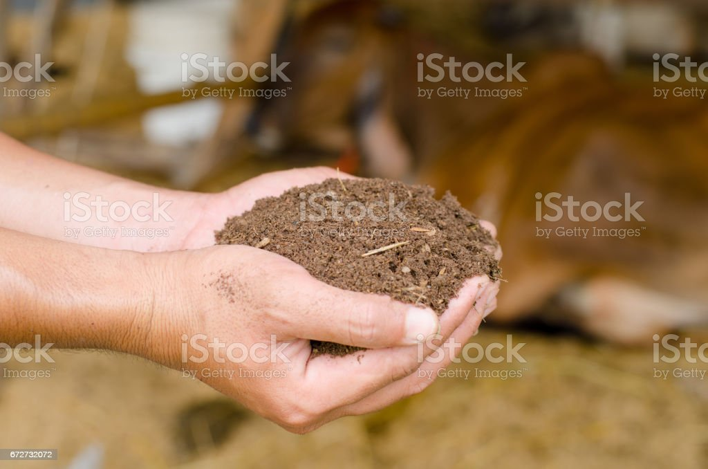 Plant organic compost fertilizer on farmer hand stock photo