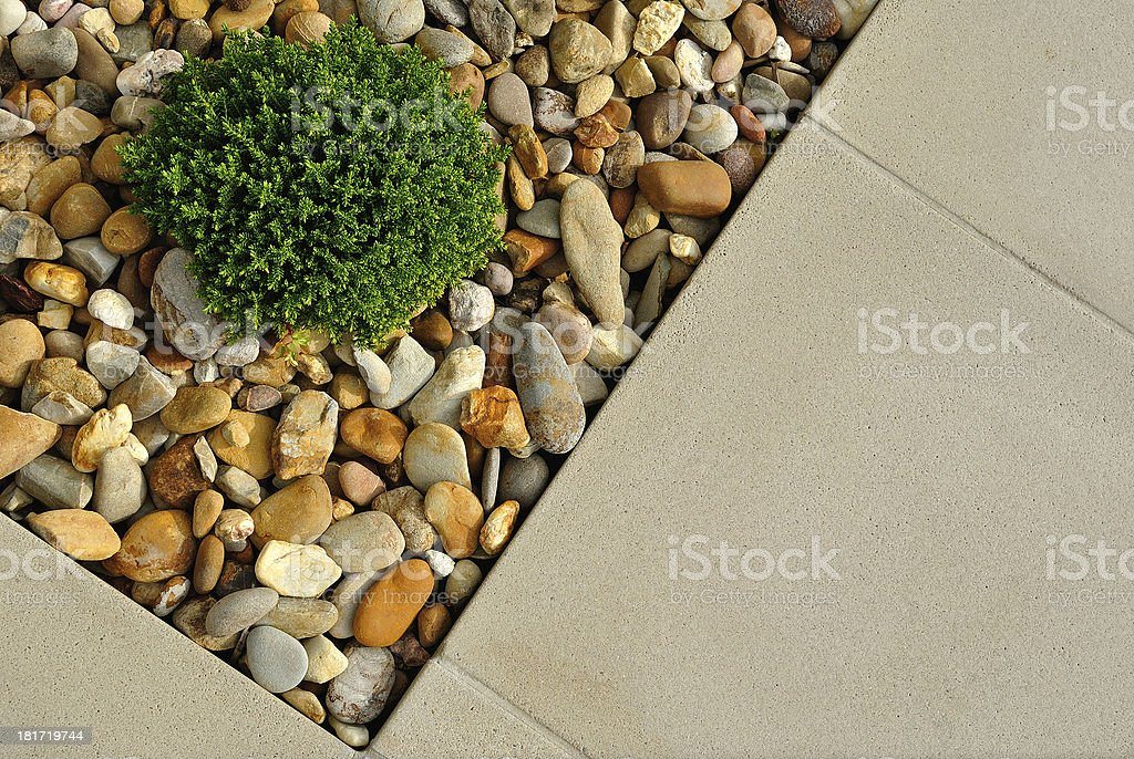 Plant, pebbles and paving texture royalty-free stock photo
