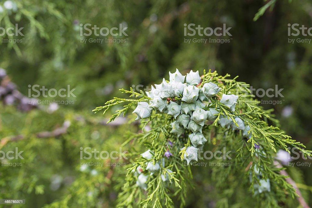 Planta foto royalty-free
