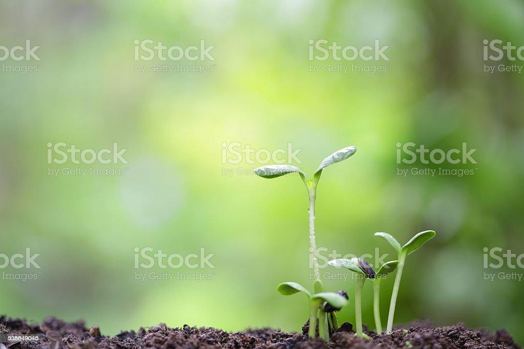 plant planting stock photo