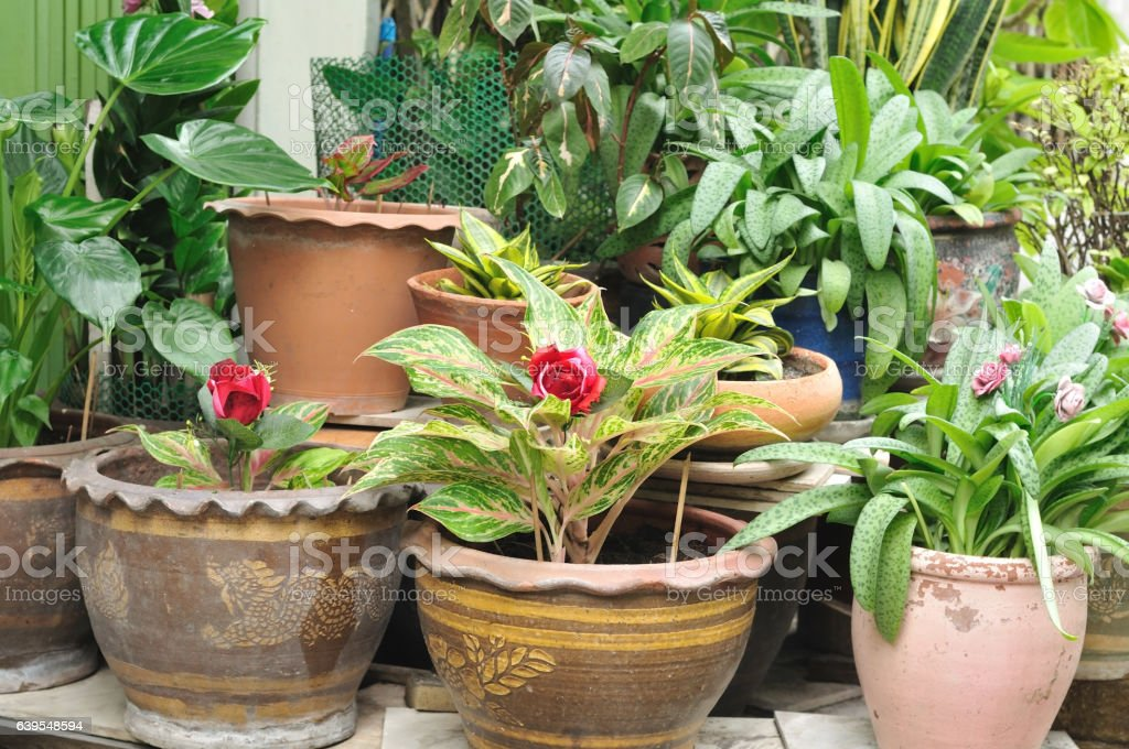 Plant pot flowers collection set of houseplants in flower pots stock photo