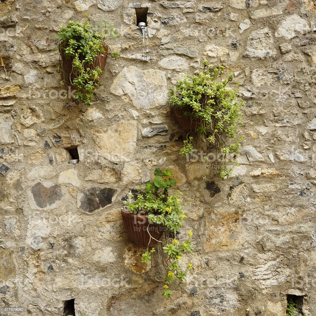 plant pots hanging from a rustic wall stock photo