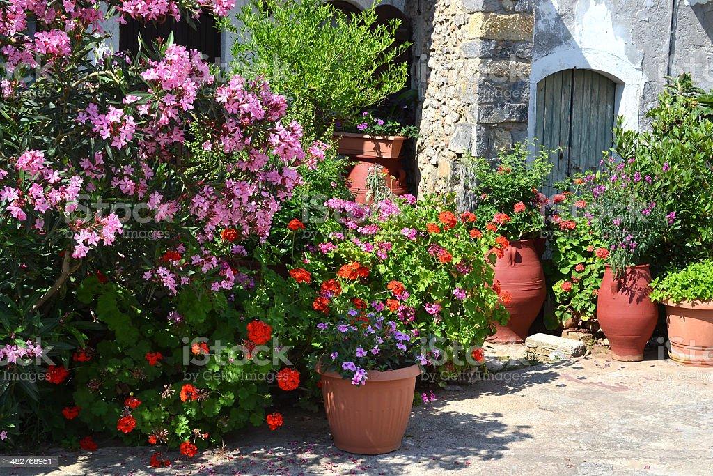 花と植物のつながります。 ロイヤリティフリーストックフォト