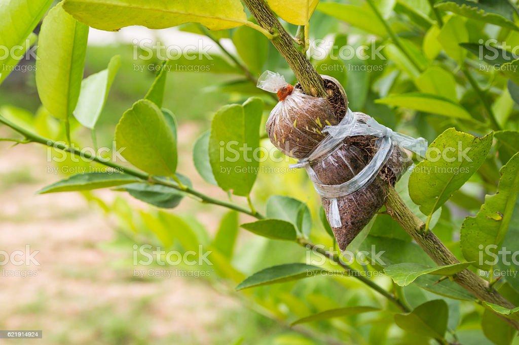 Plant Propagation Background stock photo