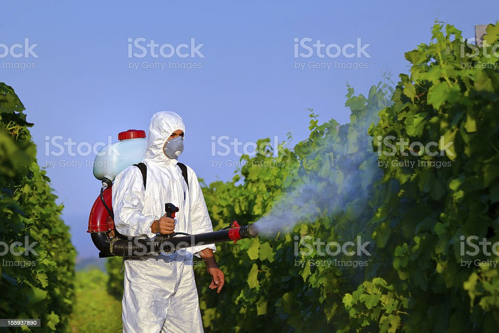Plant  protection stock photo