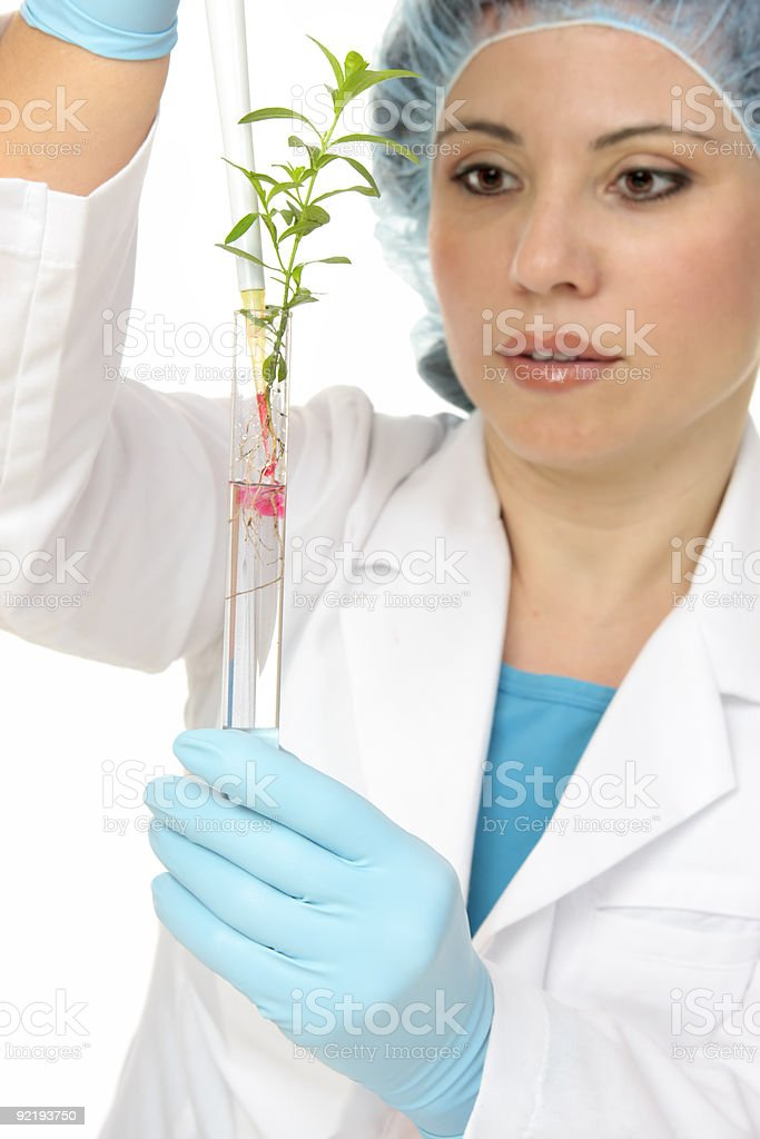 Plant Science or agronomy royalty-free stock photo
