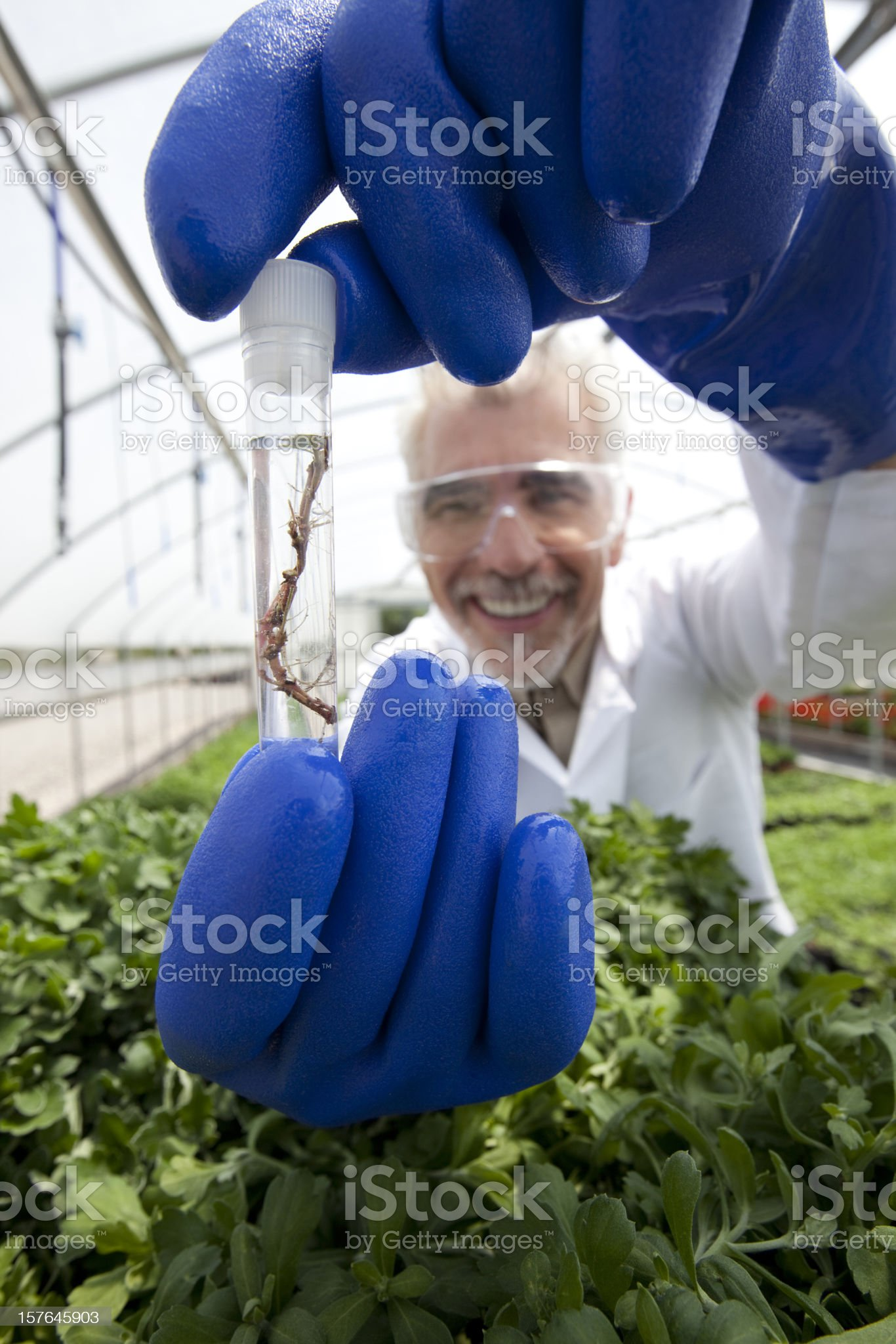 Plant science royalty-free stock photo