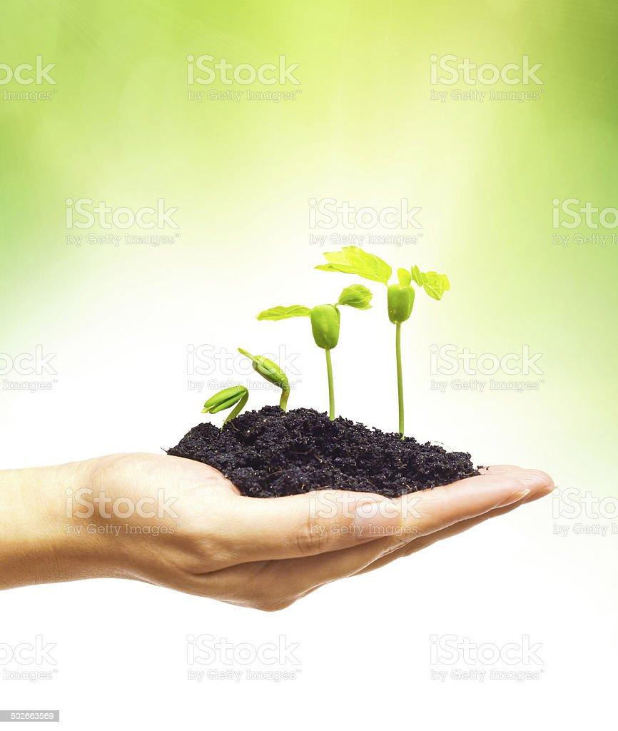 plant seedling stock photo