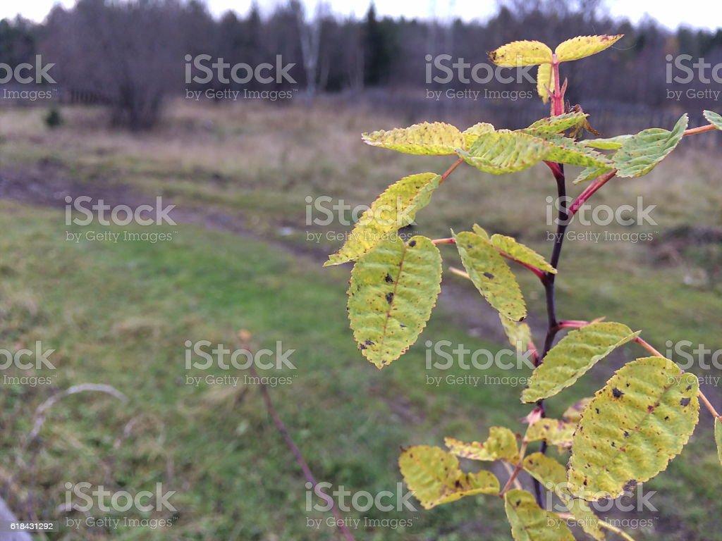 Plantez des plantes en pleine croissance dans les tubes à essai. photo libre de droits