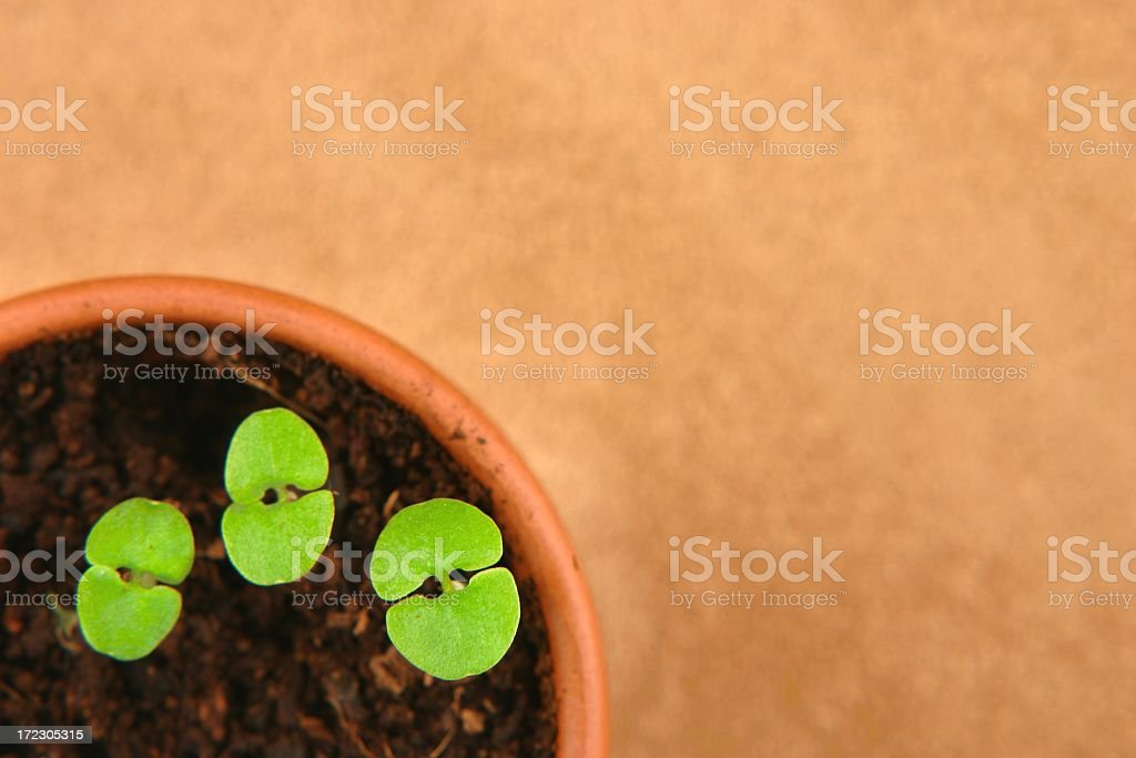 Plant Seedlings with dirt in pot royalty-free stock photo